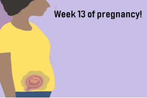 week 13 of pregnancy